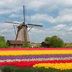 Top Netherlands App Development Companies